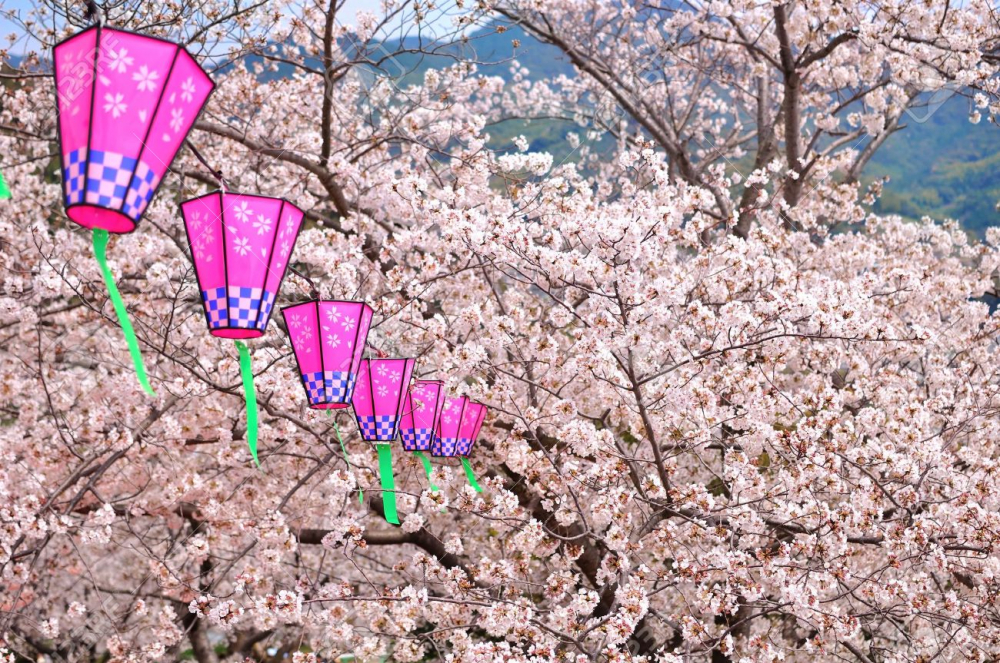 It's Spring Time: Seeing Cherry Blossom in Japan