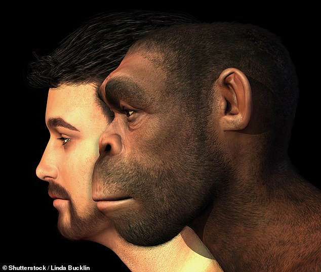 This 3D rendered digital painting shows an example of a modern human and a Homo Erectus man side-by-side. Experts now believe Homo erectus were the longest surviving humanoid species. Image: stock image/Daily Mail