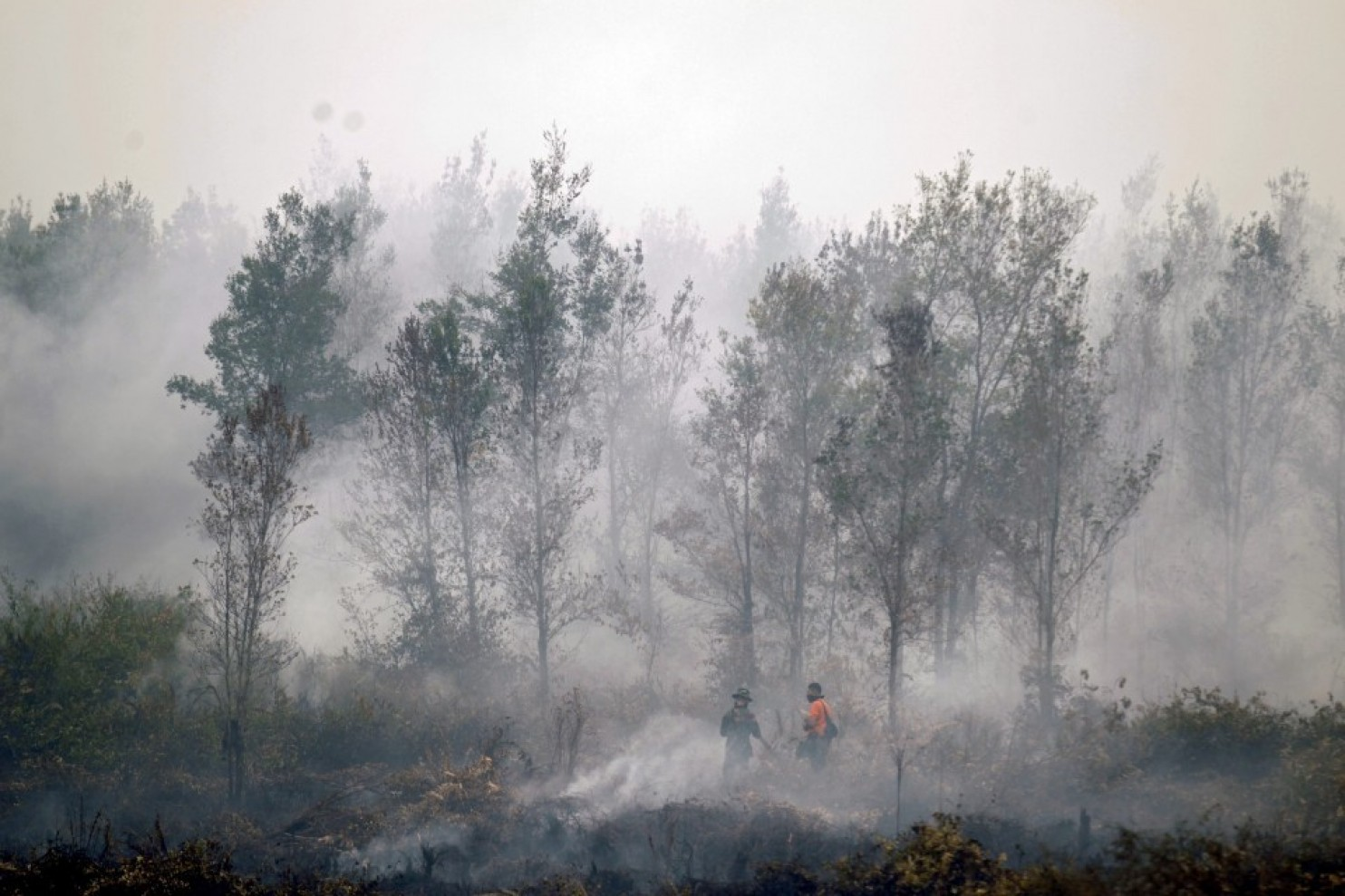 Indonesian officers put out forest fires in a village in Central Kalimantan province in September 2015. image: Bagus Indahono/European Pressphoto Agency